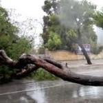 albero su strada